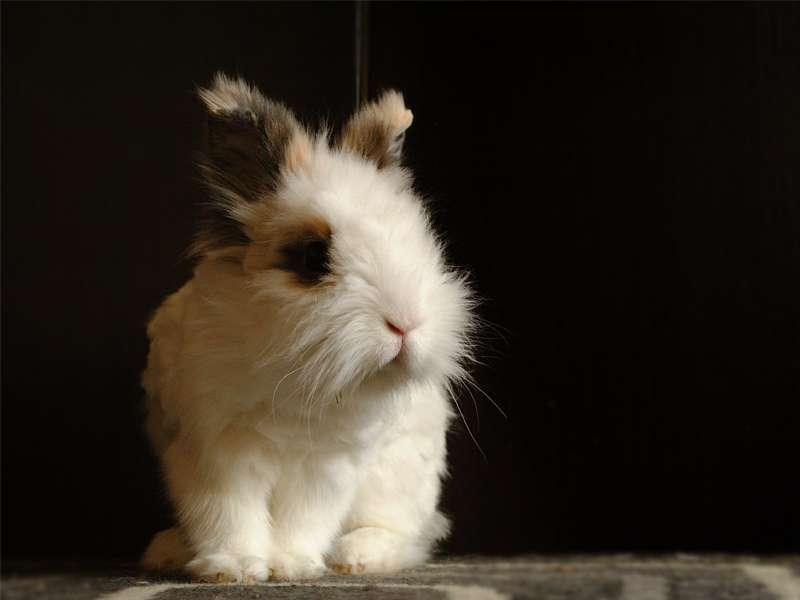 La web más completa sobre el mundo de los conejos. 5