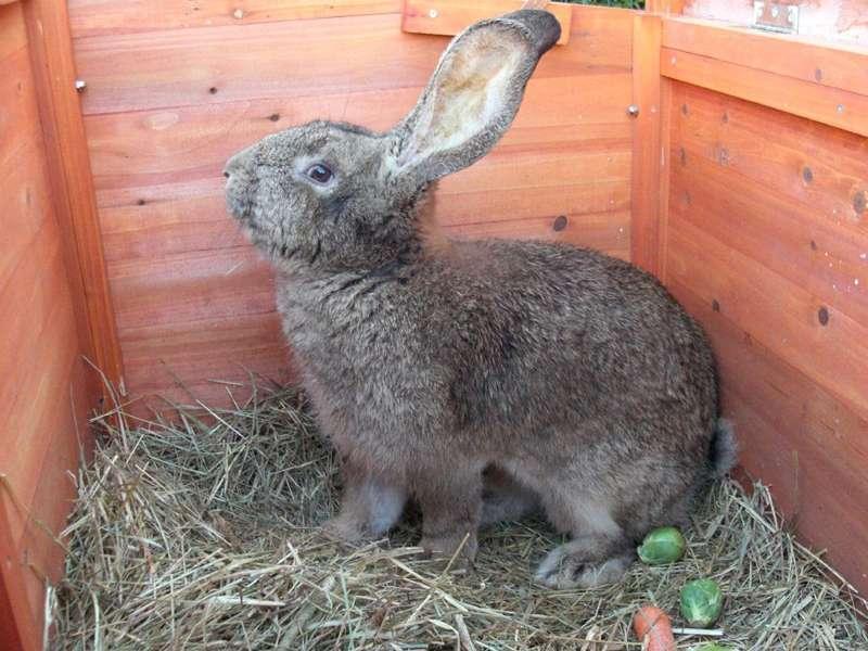 La web más completa sobre el mundo de los conejos. 3