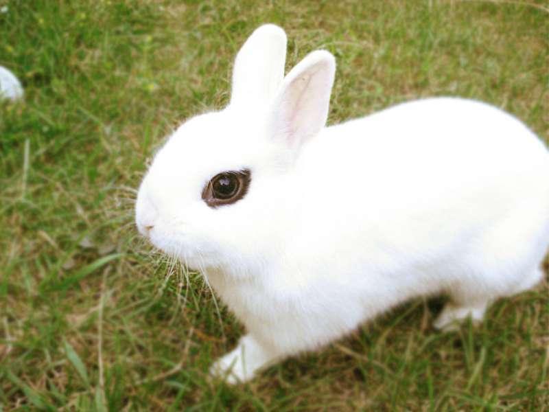 La web más completa sobre el mundo de los conejos. 1