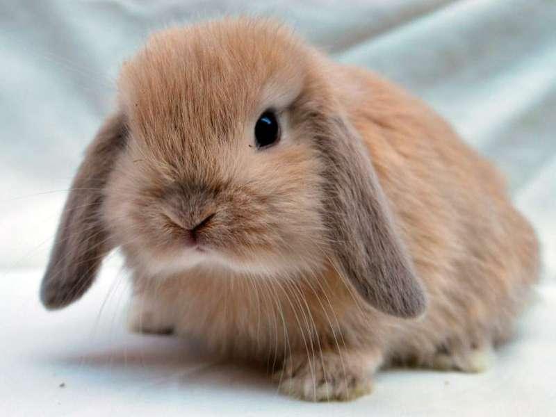 Conejo Toy 3