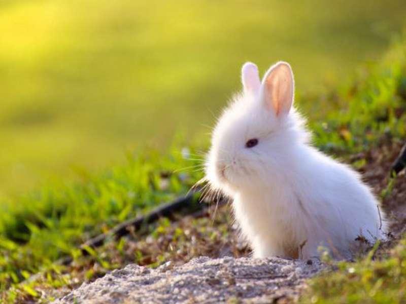 Conejo Enano 7