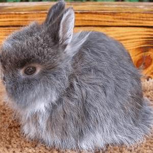 Conejo Enano 5