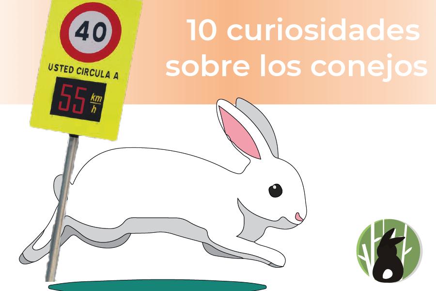 10 curiosidades sobre  los conejos 16
