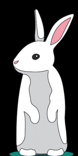 Conejo-blanco-erguido