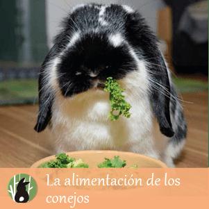 ¿Cómo debe ser la alimentación de tu conejo?