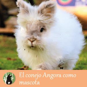 El conejo Angora como mascota