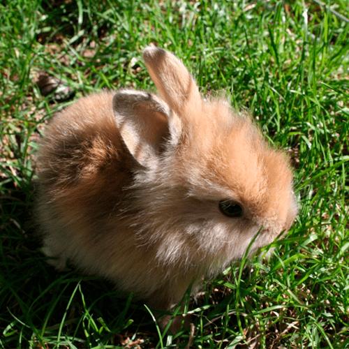 cabeza-de-leon-bebe