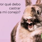 Por que es beneficioso esterilizar a nuestro conejo 11