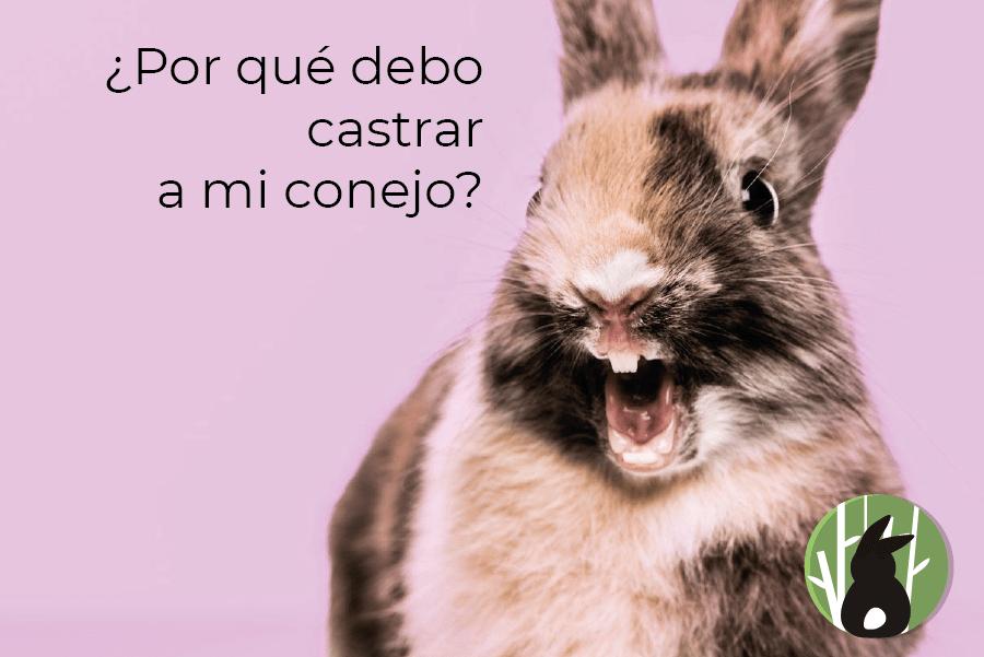 Por que es beneficioso esterilizar a nuestro conejo
