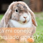 ¿Está mi conejo demasiado gordo? 59