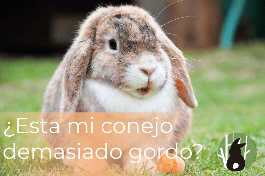 ¿Está mi conejo demasiado gordo? 9