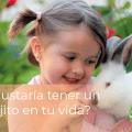 ¿Te gustaría tener un conejito en tu vida? 4