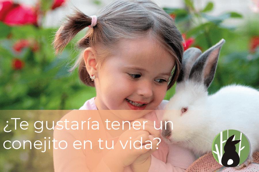 ¿Te gustaría tener un conejito en tu vida? 1