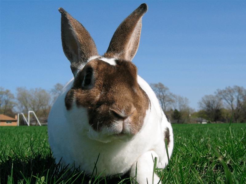 La web más completa sobre el mundo de los conejos. 4