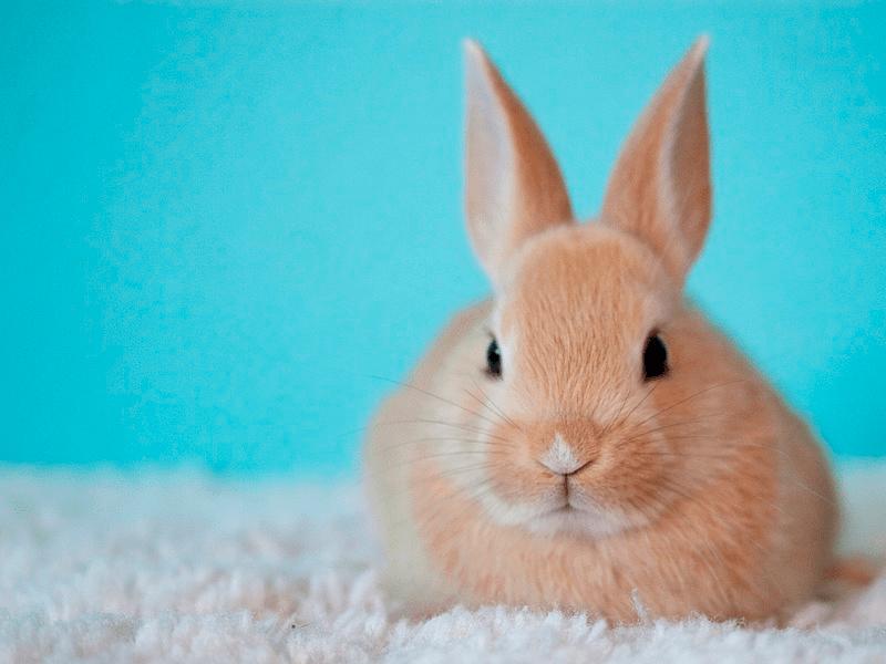 Conejo Toy 1