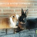 Convivencia entre conejos 1