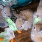 Gazapos y su alimentación 8