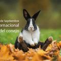 Dia Internacional del conejo 3