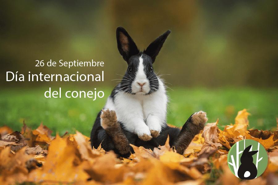 Dia Internacional del conejo