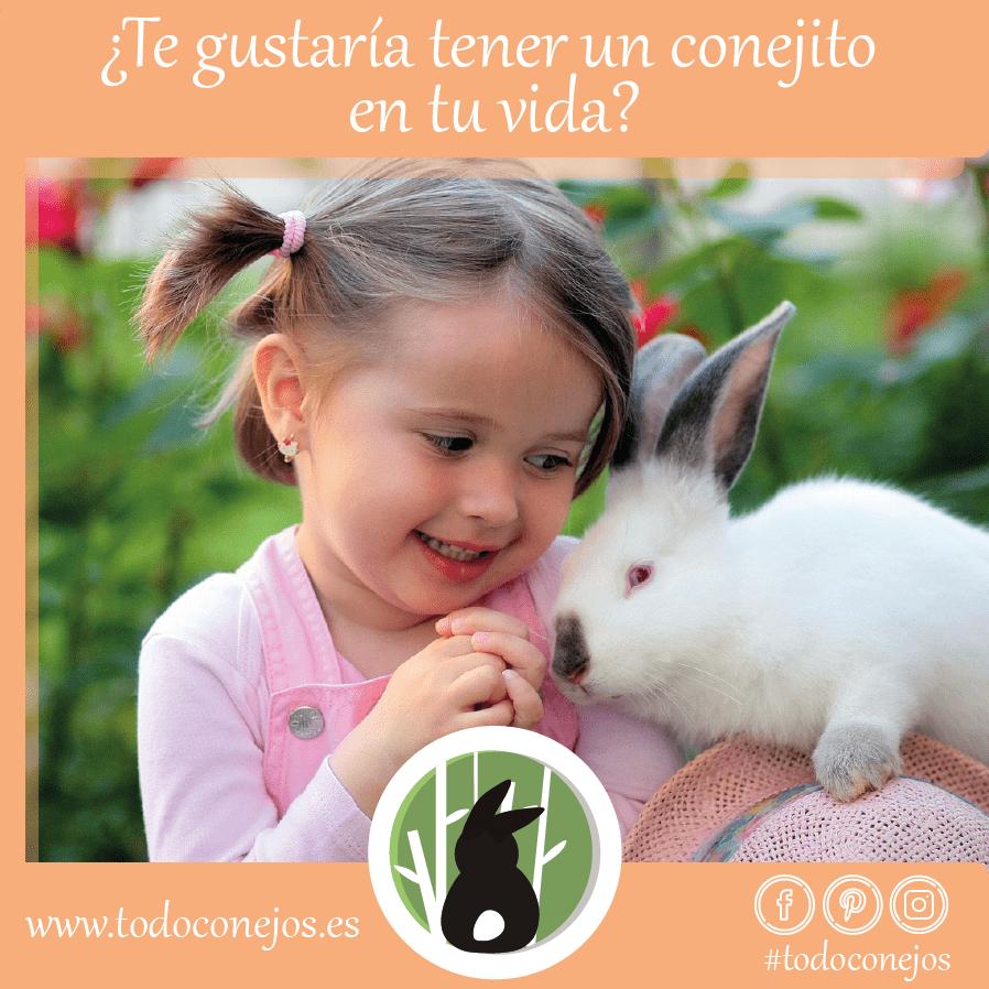 ¿Te gustaría tener un conejito en tu vida?