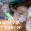 GAZAPOS Y SU ALIMENTACIÓN 17