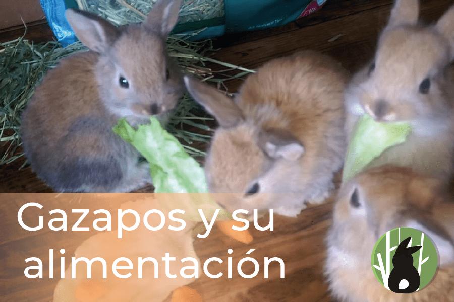 GAZAPOS Y SU ALIMENTACIÓN