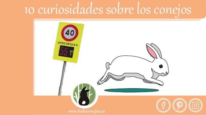 post-curiosidades-conejos-27
