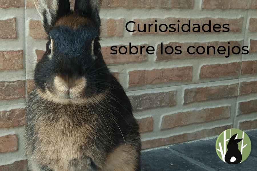 Curiosidades conejiles 1