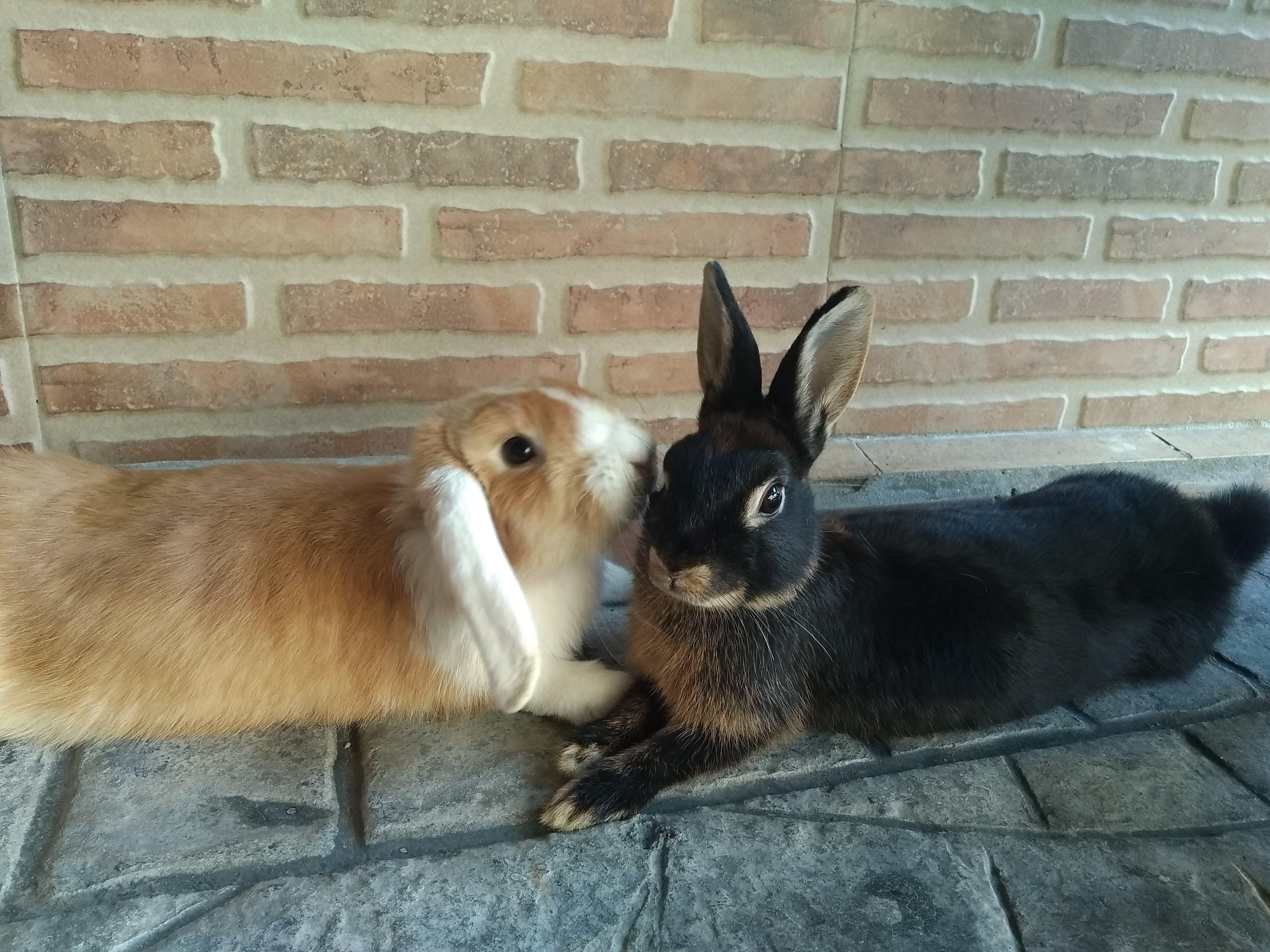 Convivencia entre conejos 2