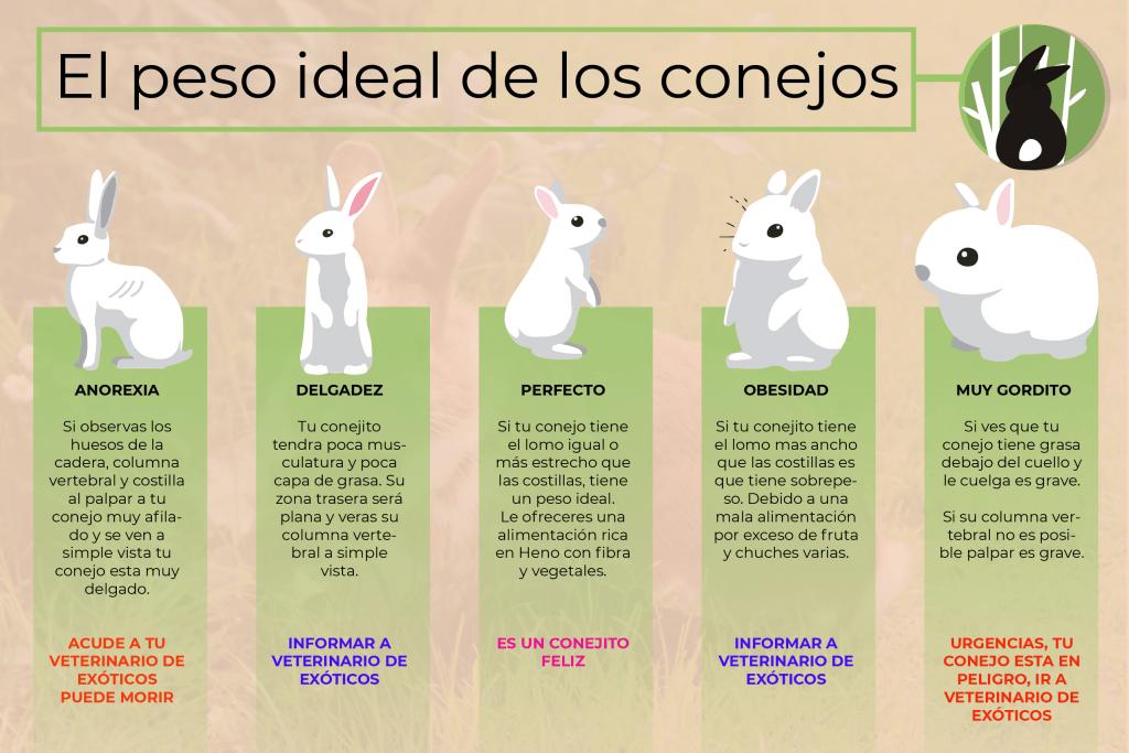 ¿Está mi conejo demasiado gordo? 🍔 3