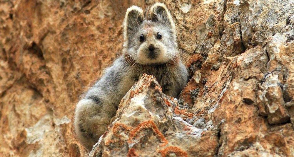 Imagen obtenido de National Geographic