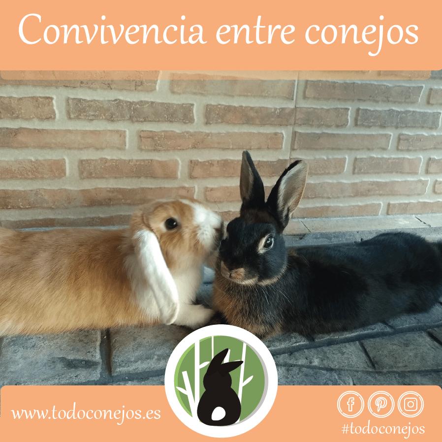 convivencia-entre-conejos