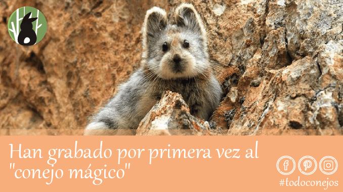"""Han grabado por primera vez al """"conejo mágico"""""""