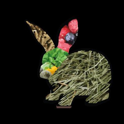 piramide-alimentacion-conejos-45