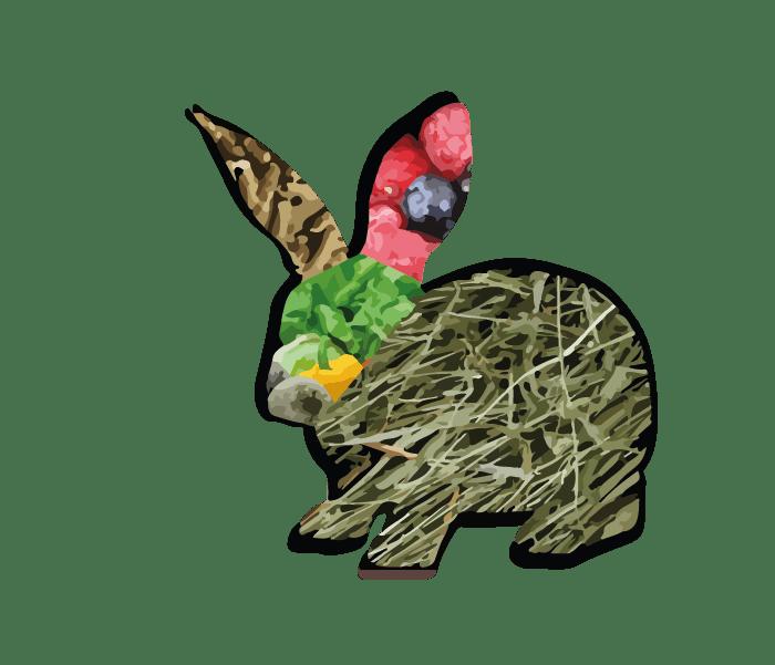 ¿Qué comen los conejos domésticos? ? 2