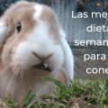 Las 2 mejores dietas semanales para tu conejo 3