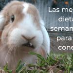 2 dietas semanales para tu conejo 58