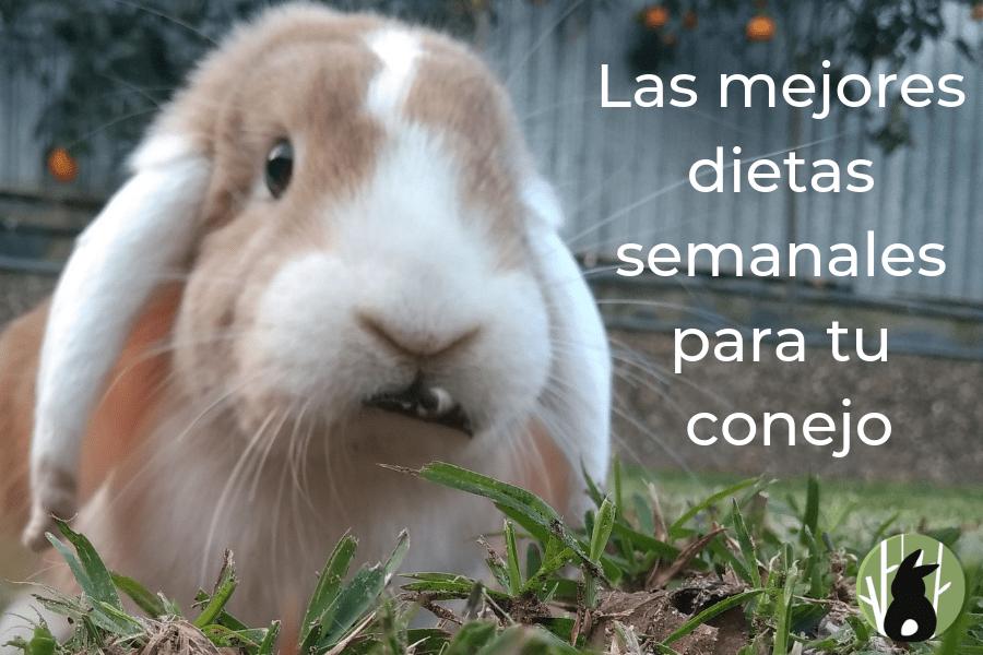 Las 2 mejores dietas semanales para tu conejo 5