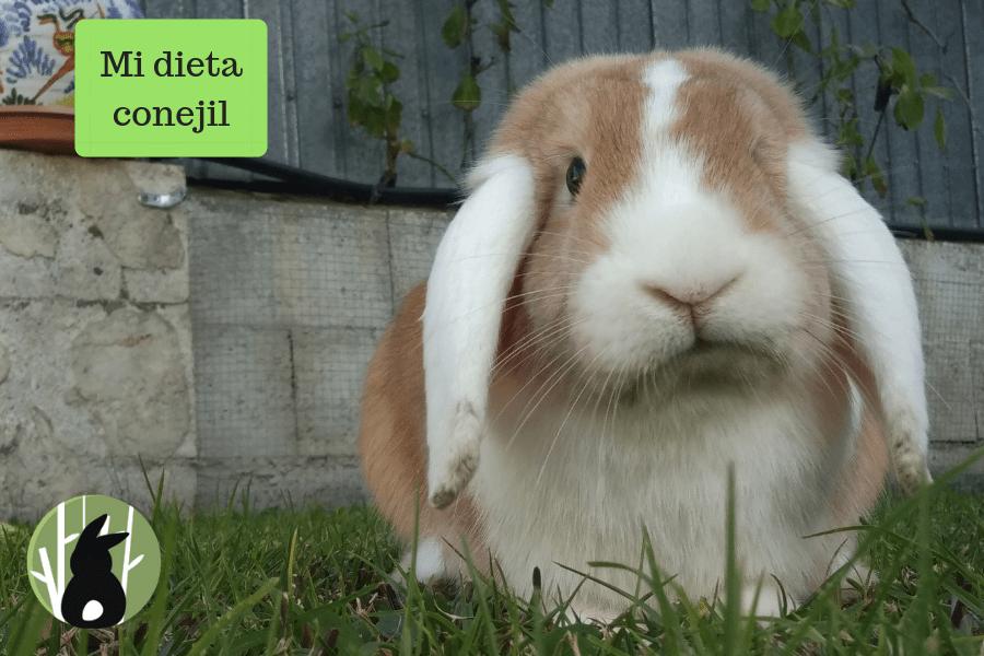 Mi dieta conejil(1)