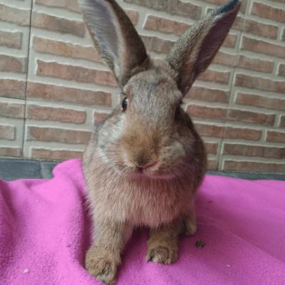 Cuidado de las uñas de tu conejo 1