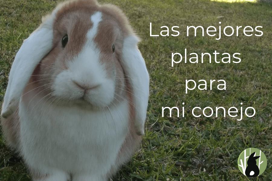 Las mejores plantas para tu conejo 1