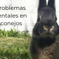 Problemas dentales en conejos 4