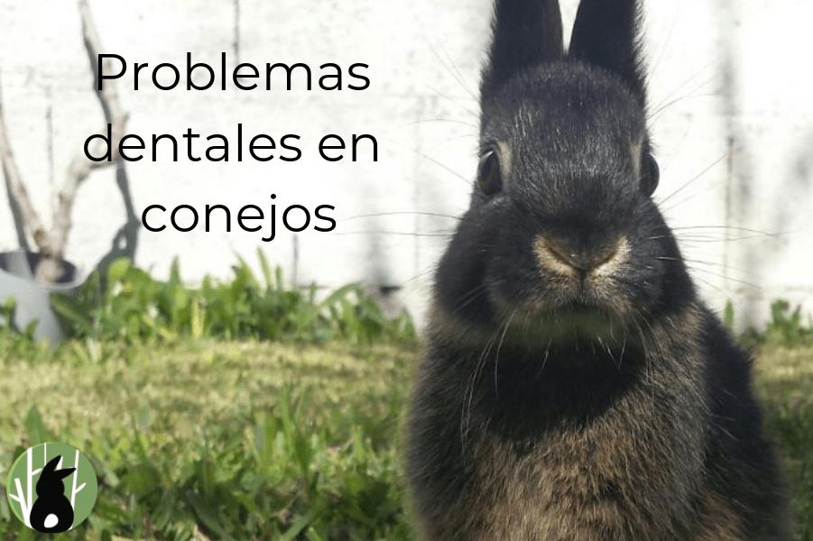 Problemas dentales en conejos 1
