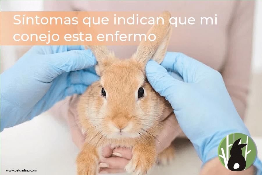 Síntomas que indican que mi conejo esta enfermo 1