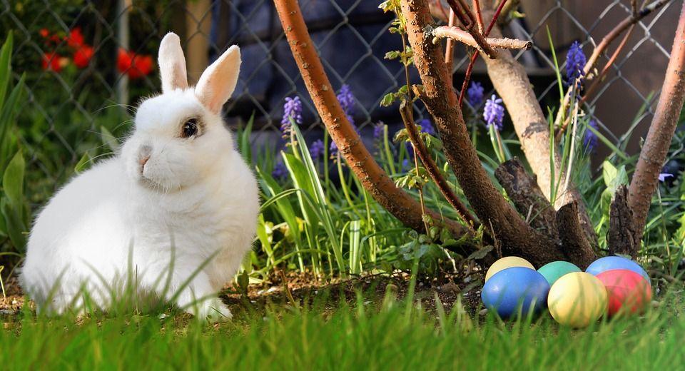 El conejo de Pascua 1