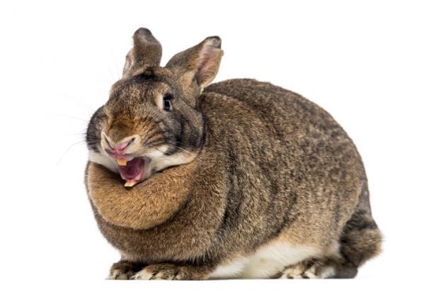 Enfermedades de los conejos 4
