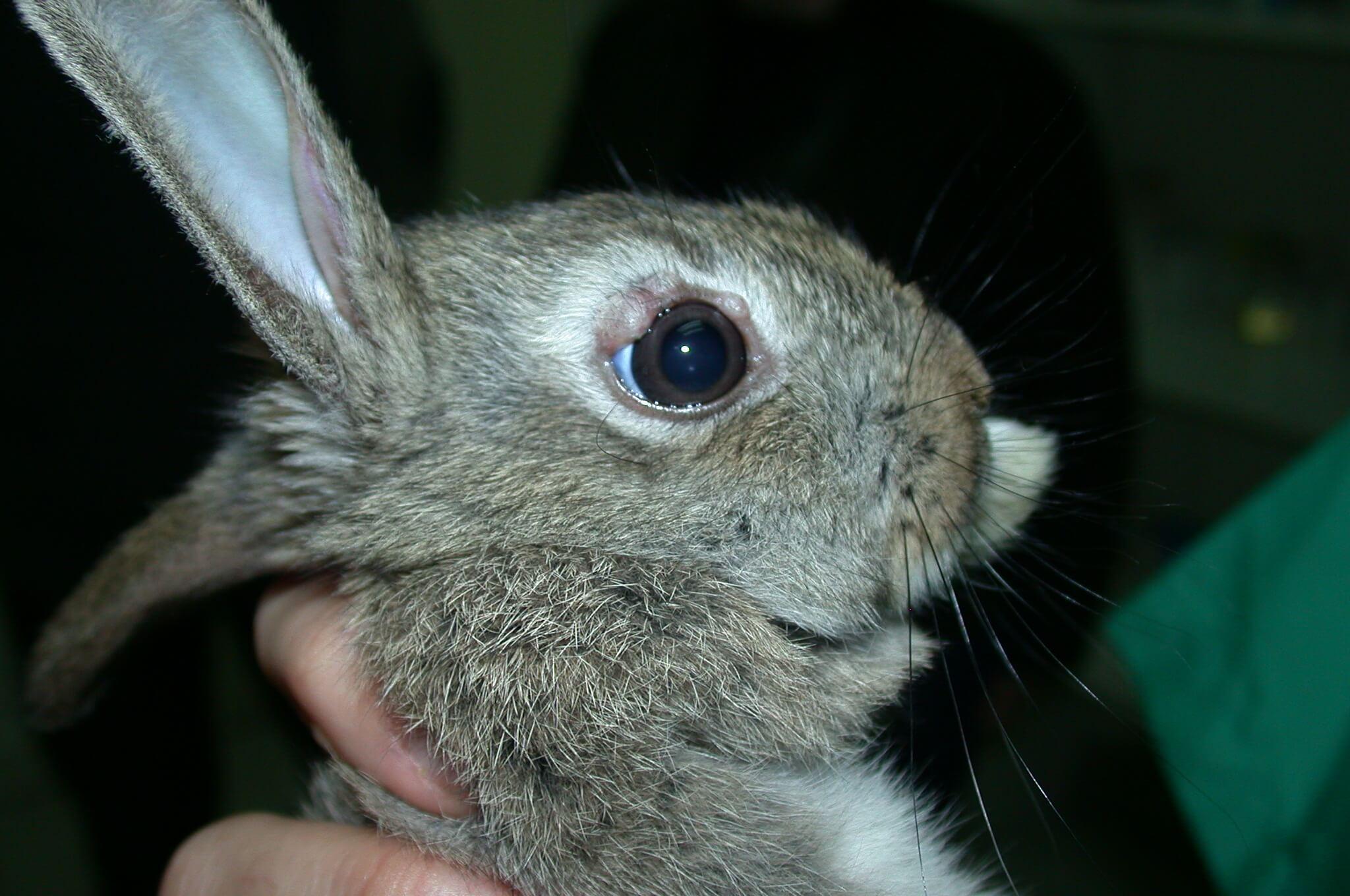 Enfermedades de los conejos 5