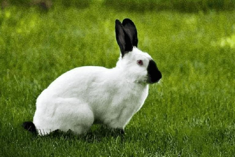 Razas de Conejos ? 34