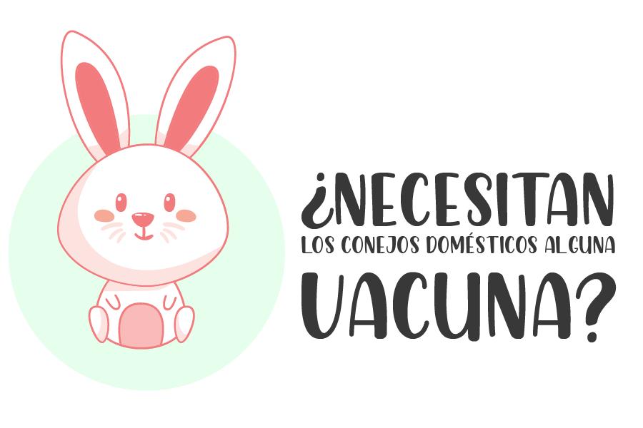 ¿Los conejos domésticos necesitan alguna inyección o vacuna? 1