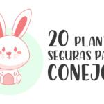 20 plantas seguras para conejos 10